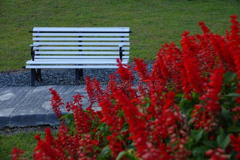 Eenzame lege bank in openbaar park voor rust stock foto's