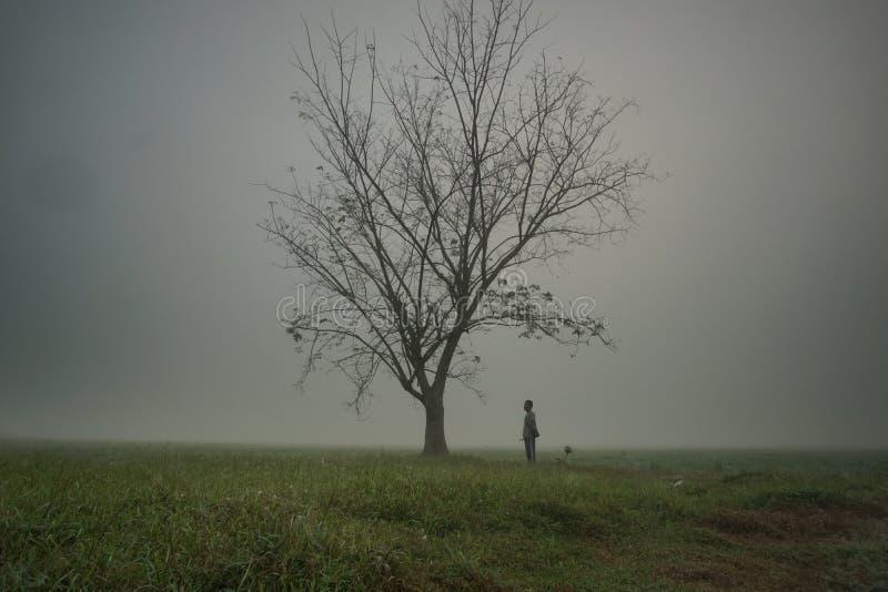 Eenzame mens dichtbij een eenzame boom bij het padiegebied op plattelandsgebied dichtbij kelantan schot met camera fijn art. royalty-vrije stock fotografie
