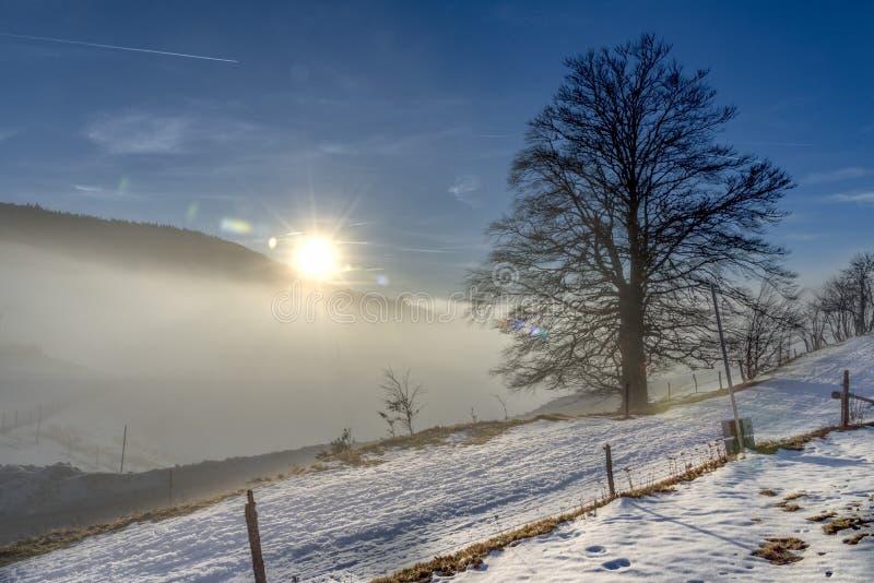 Eenzame oude boom in de sneeuw stock foto's