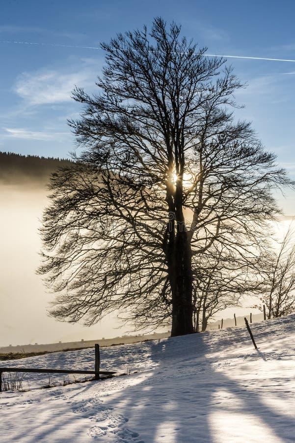 Eenzame oude boom in de sneeuw royalty-vrije stock foto