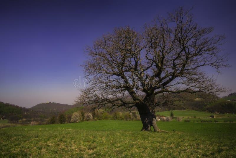Eenzame oude boom royalty-vrije stock foto's