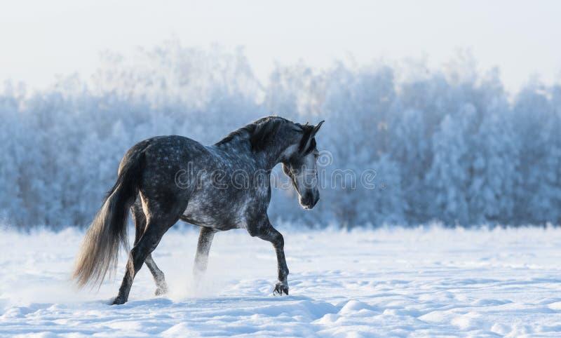 Eenzame paardgangen op het gebied royalty-vrije stock afbeeldingen