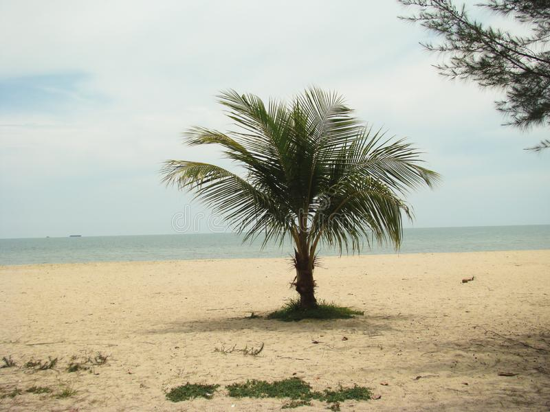 Eenzame palm royalty-vrije stock foto