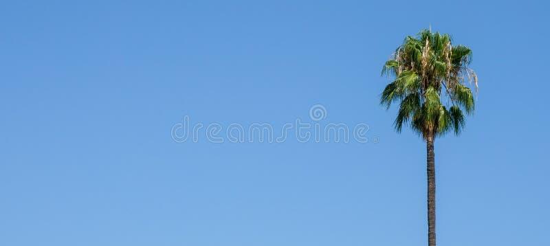 Eenzame palm royalty-vrije stock afbeeldingen