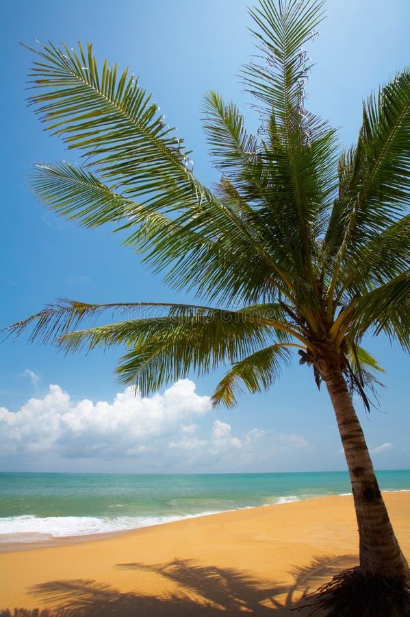 Eenzame palm royalty-vrije stock foto's