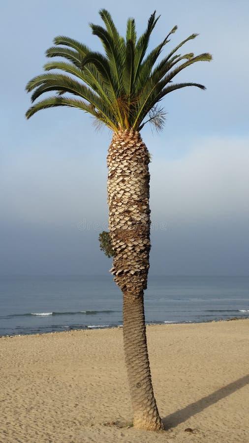Eenzame Palm stock foto