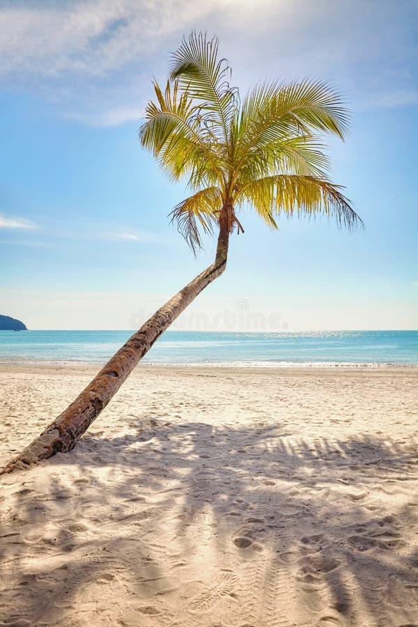 Eenzame palm op een mooi tropisch strand bij warme zonsondergangli stock afbeeldingen