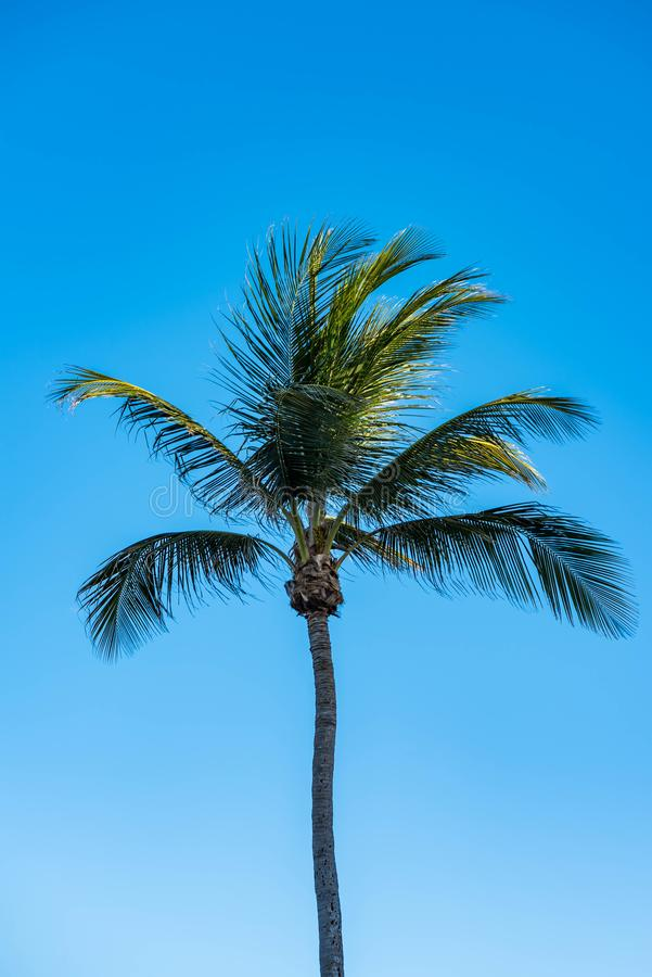 Eenzame palm tegen de heldere blauwe hemel van Florida stock foto