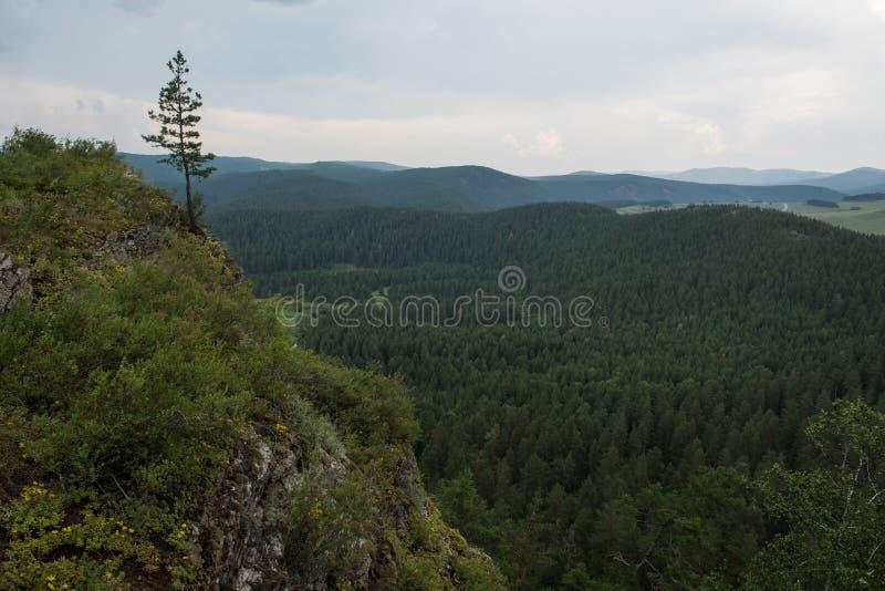 Eenzame pijnboom-boom op de rots stock afbeelding