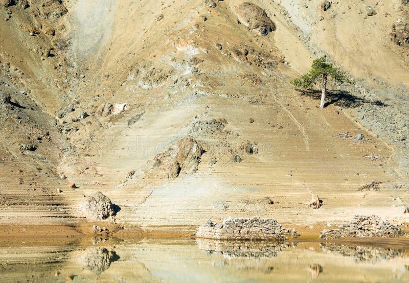 Eenzame pijnboomboom bij een helling van een berg stock fotografie