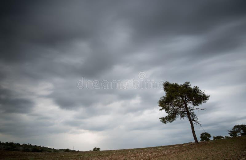 Download Eenzame Pijnboomboom En Bewolkte Stormachtige Hemel Stock Foto - Afbeelding bestaande uit bewolkt, midden: 107700746