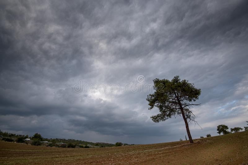 Download Eenzame Pijnboomboom En Bewolkte Stormachtige Hemel Stock Afbeelding - Afbeelding bestaande uit hemel, spar: 107700875