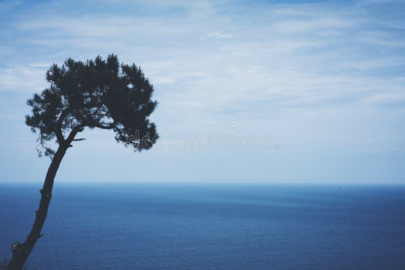 Eenzame pijnboomboom op achtergrondoverzees scape, golven van blauw stil oceaankustlandschap Van de het perspectiefmening van de  royalty-vrije stock foto's