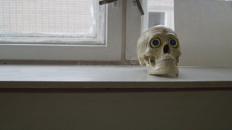Eenzame schedel stock afbeelding