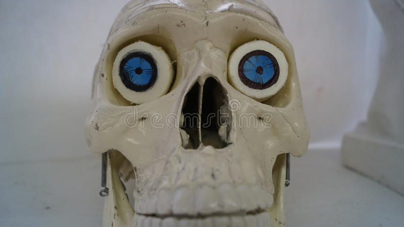 Eenzame schedel royalty-vrije stock foto