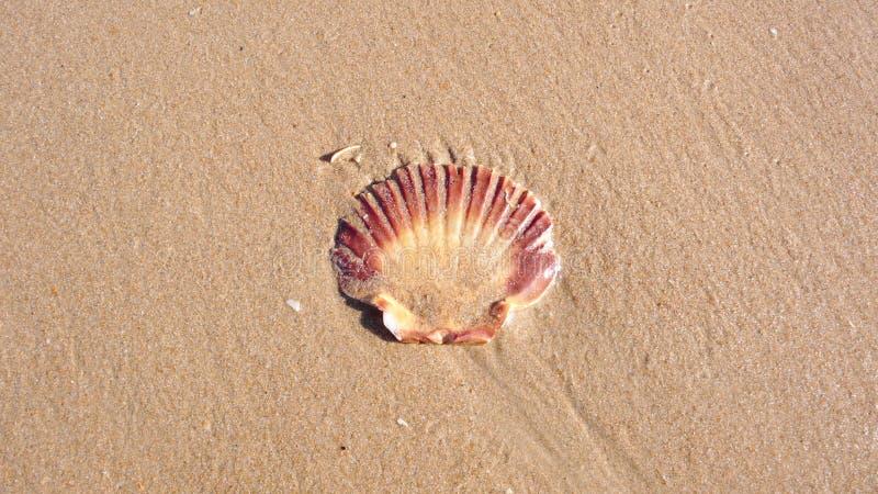 Eenzame Shell On een Strand stock afbeelding