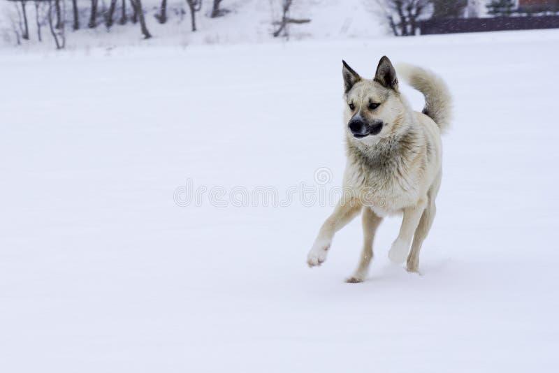 Eenzame straathond in een goede stemming die met stok spelen royalty-vrije stock afbeeldingen