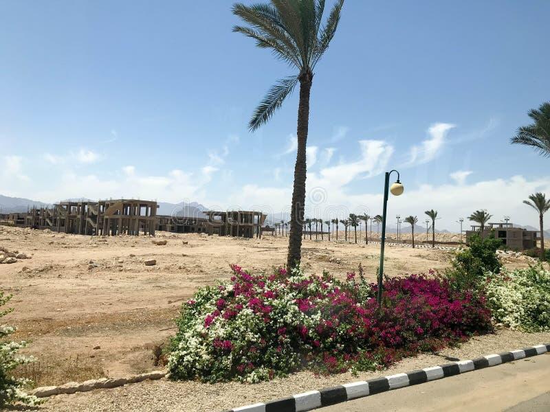 Eenzame tropische palmen in de woestijn onder de open hemel op vakantie, tropische, zuidelijke, warme toevlucht onder de zon in E stock foto's