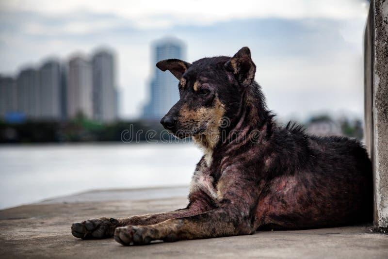 Eenzame verdwaalde schurftige hond bij pijler dichtbij de rivier met vage stad royalty-vrije stock foto's