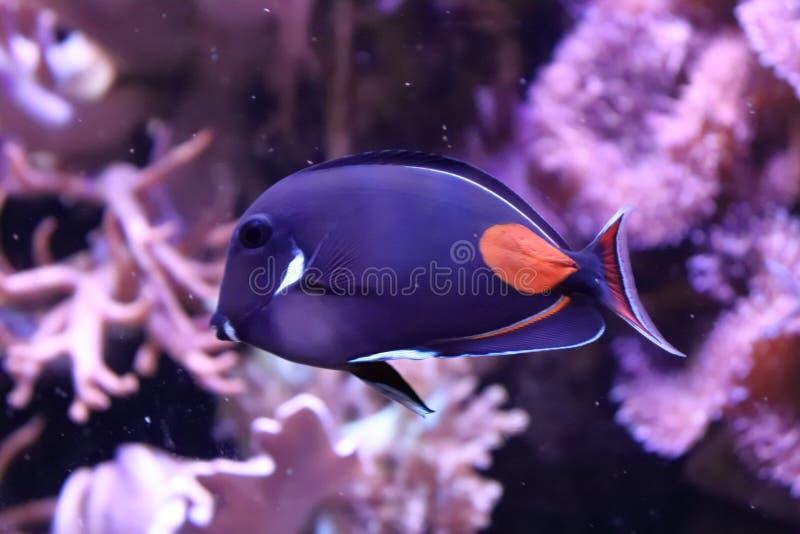 Eenzame vissen in dierentuin in Duitsland royalty-vrije stock afbeelding
