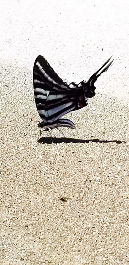 Eenzame vlinder royalty-vrije stock foto's