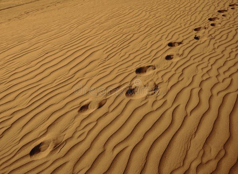 Eenzame Voetafdrukken in zand-Horizontaal royalty-vrije stock foto