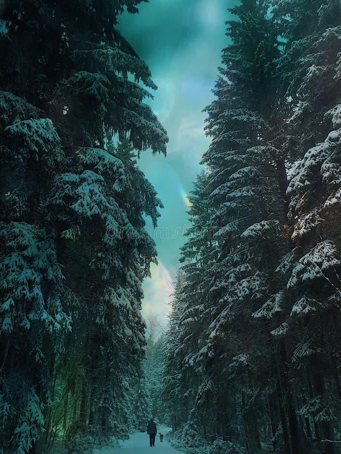 Eenzame weg in het bos stock fotografie