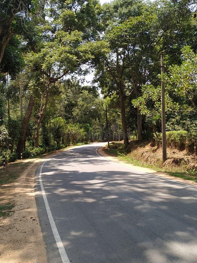 Eenzame weg met rond bomen royalty-vrije stock afbeelding