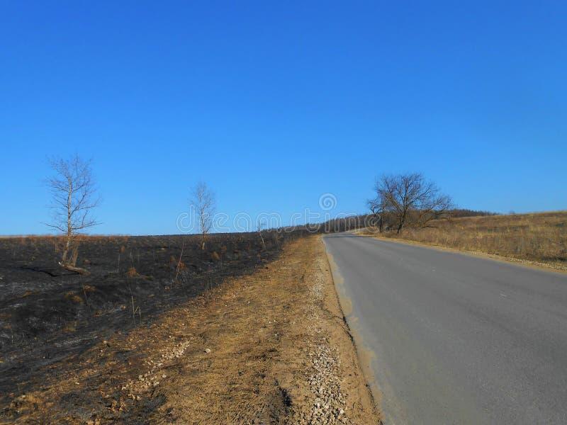 Eenzame weg met zelfde bomen royalty-vrije stock afbeelding
