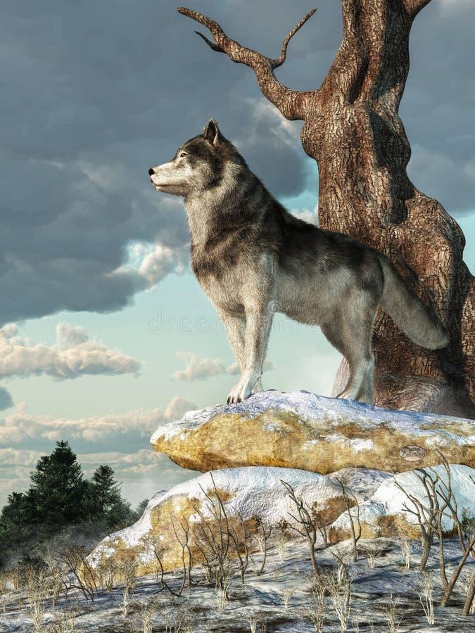 Eenzame Wolf vector illustratie
