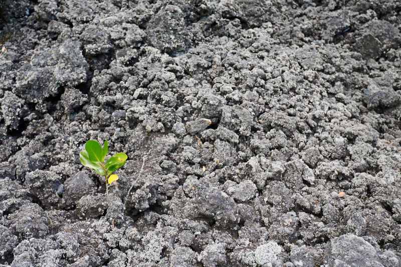Eenzame zaailing die onder de verlatenheid van vulkanische as overleven stock afbeeldingen