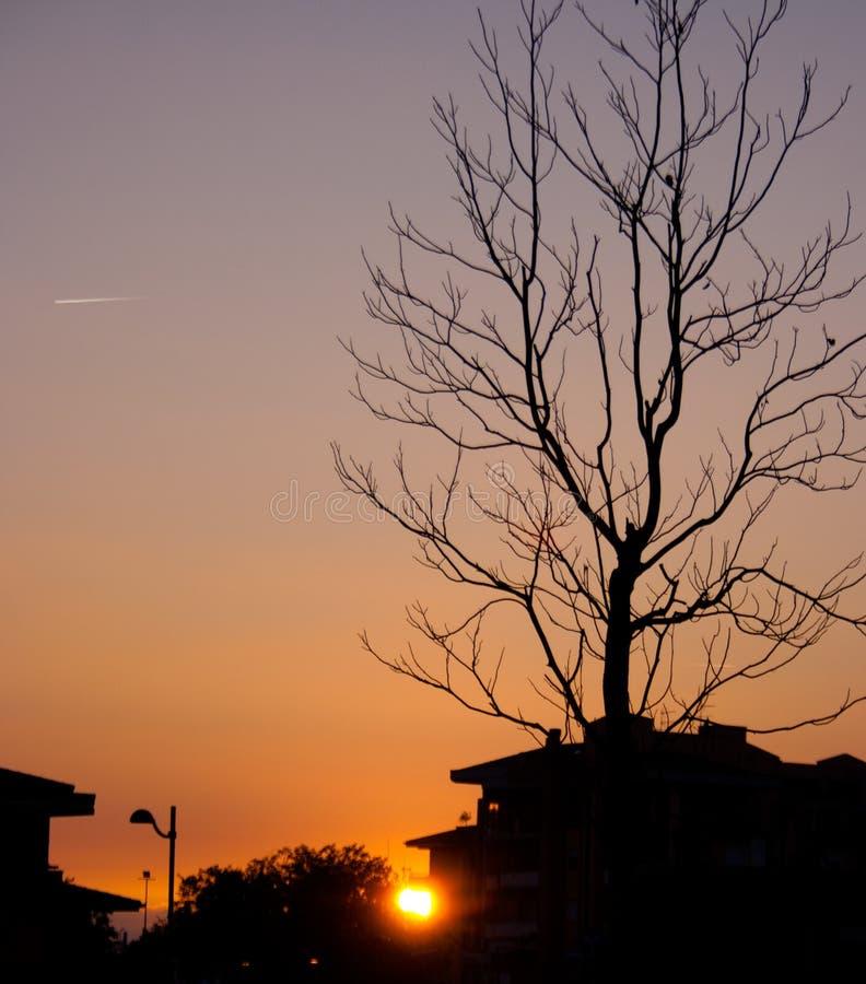 Eenzame zonsondergang stock fotografie