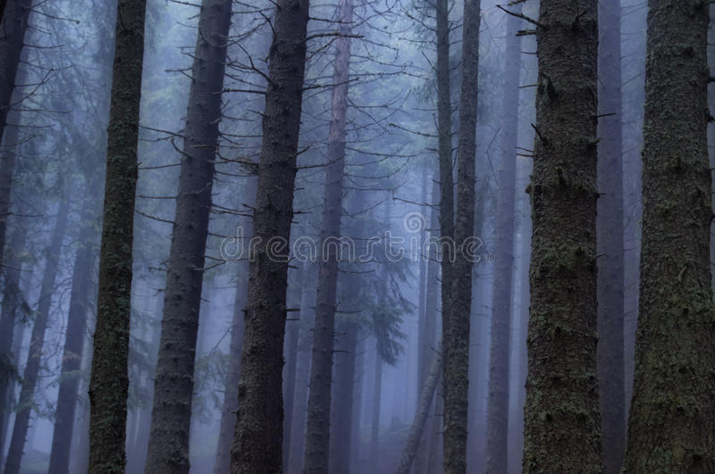 Download Eerie forest stock image. Image of dome, mood, ground - 17396991