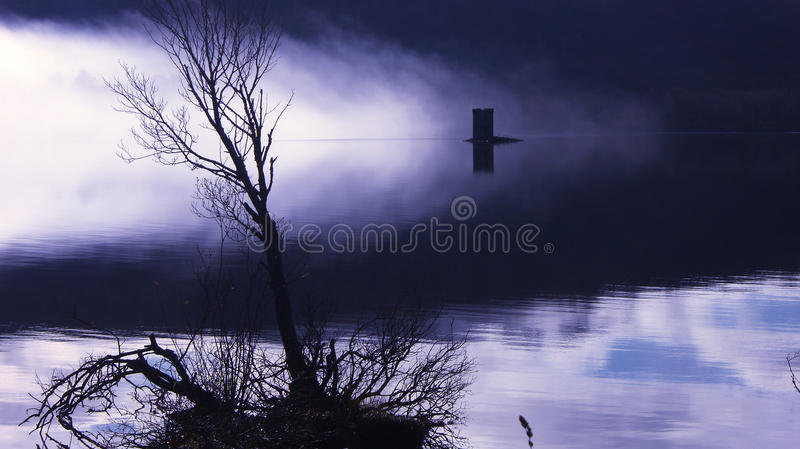 Download Eerie Misty Lake stock image. Image of plant, tree, water - 22247105
