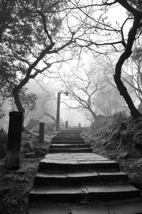 Eerie pathway. To a cemetery royalty free stock photography
