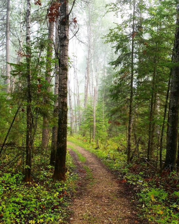 Eerie Woods stock photo