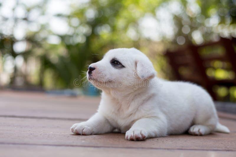 Download Eerlijke Hond, Kleine Leuke Puppyhond Stock Foto - Afbeelding bestaande uit leuk, weinig: 107702722
