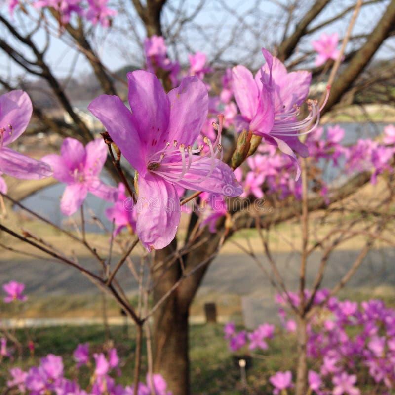 Eerste bloei van de lente stock afbeeldingen