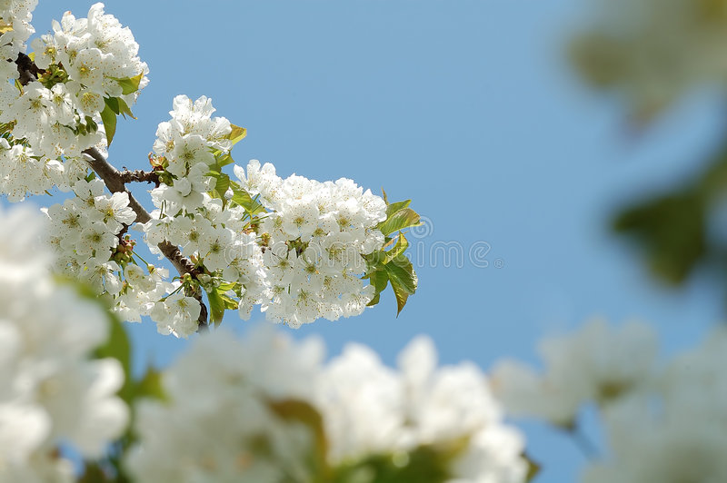Eerste bloemen royalty-vrije stock foto