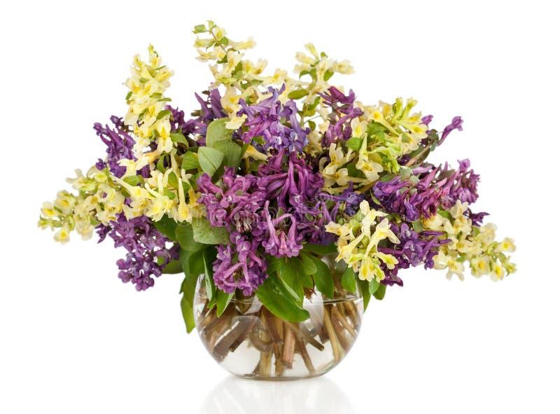 Eerste bosdie de lentesbloemen in vaas, op wit wordt geïsoleerd stock foto's