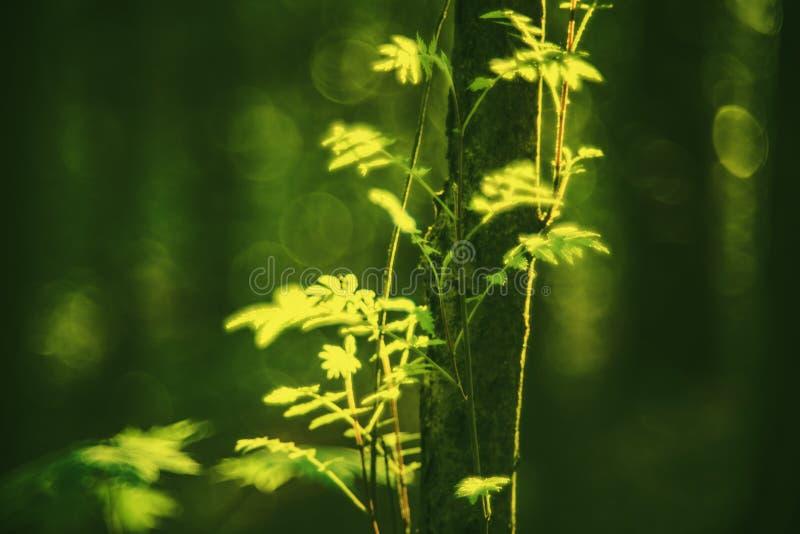 Eerste de lentebladeren in bos royalty-vrije stock fotografie