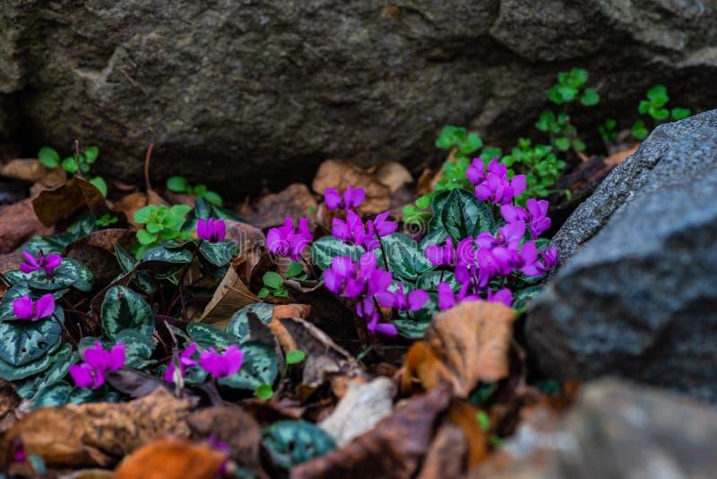 Eerste de lentebloemen stock foto