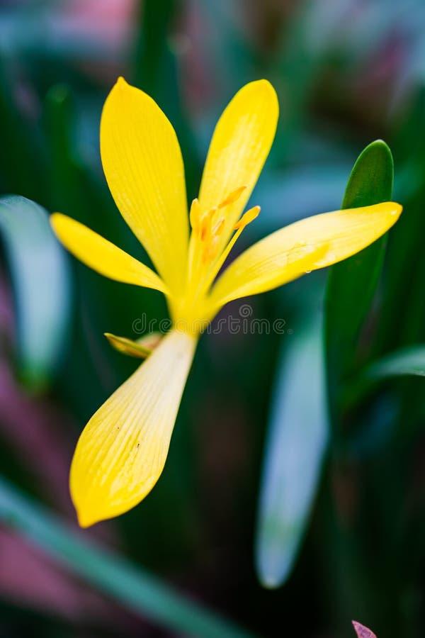 Eerste de lentebloemen royalty-vrije stock foto's