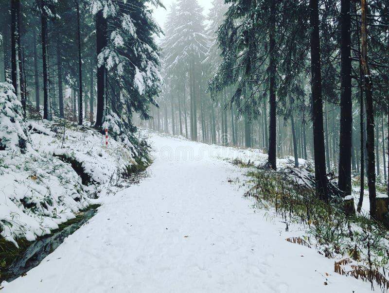 Eerste sneeuw stock foto's