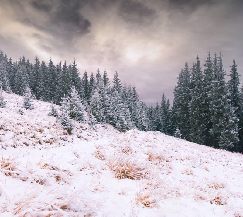 Eerste sneeuw in bergbos royalty-vrije stock fotografie