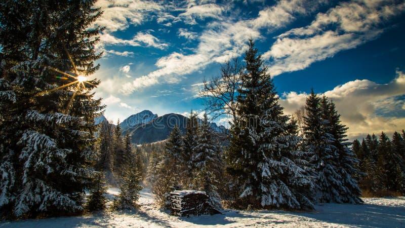 Eerste sneeuw bij de berg stock foto
