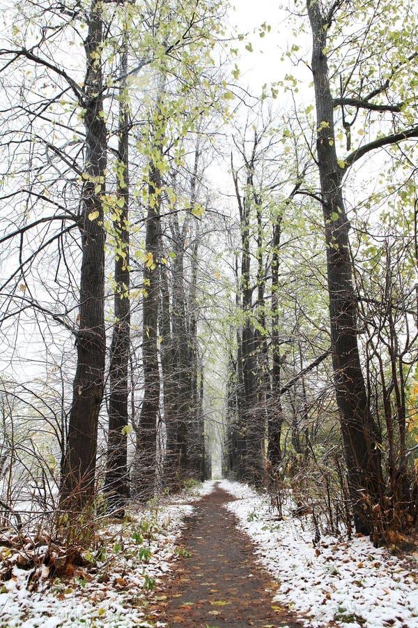 Eerste sneeuw in daling stock foto