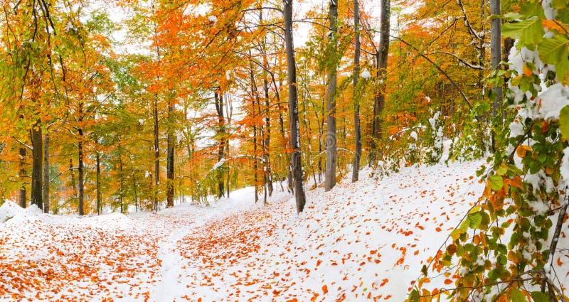 Eerste sneeuw in het bos royalty-vrije stock foto's