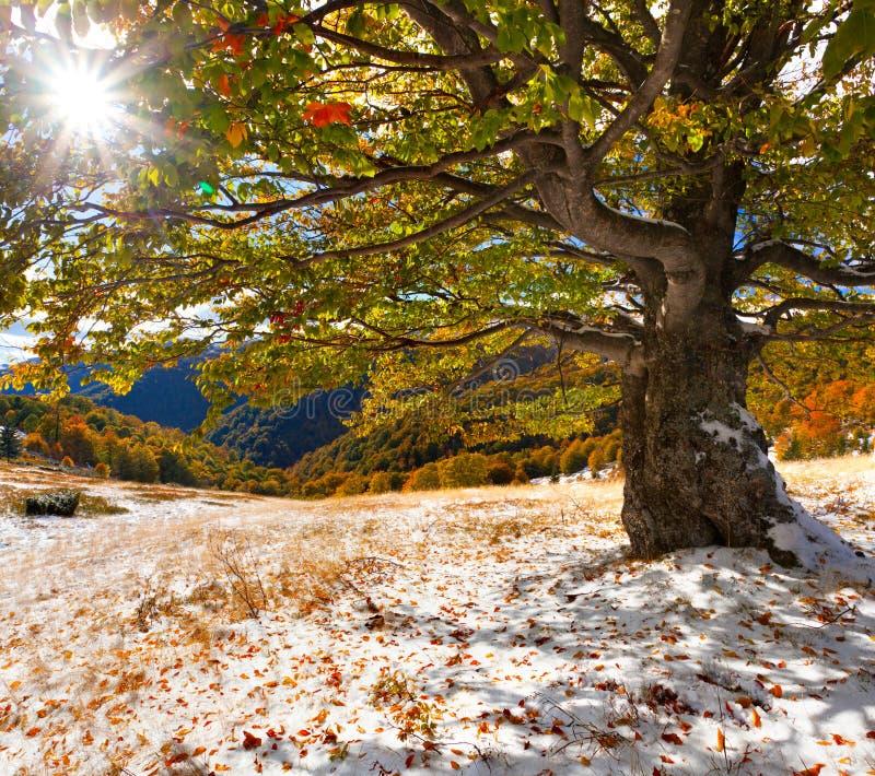 Eerste sneeuw in het bos royalty-vrije stock fotografie