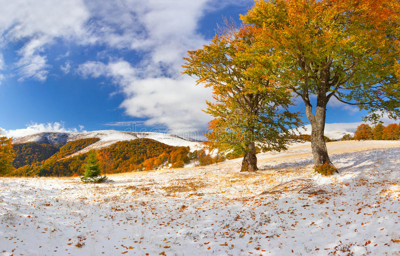 Eerste sneeuw in het bos royalty-vrije stock afbeelding